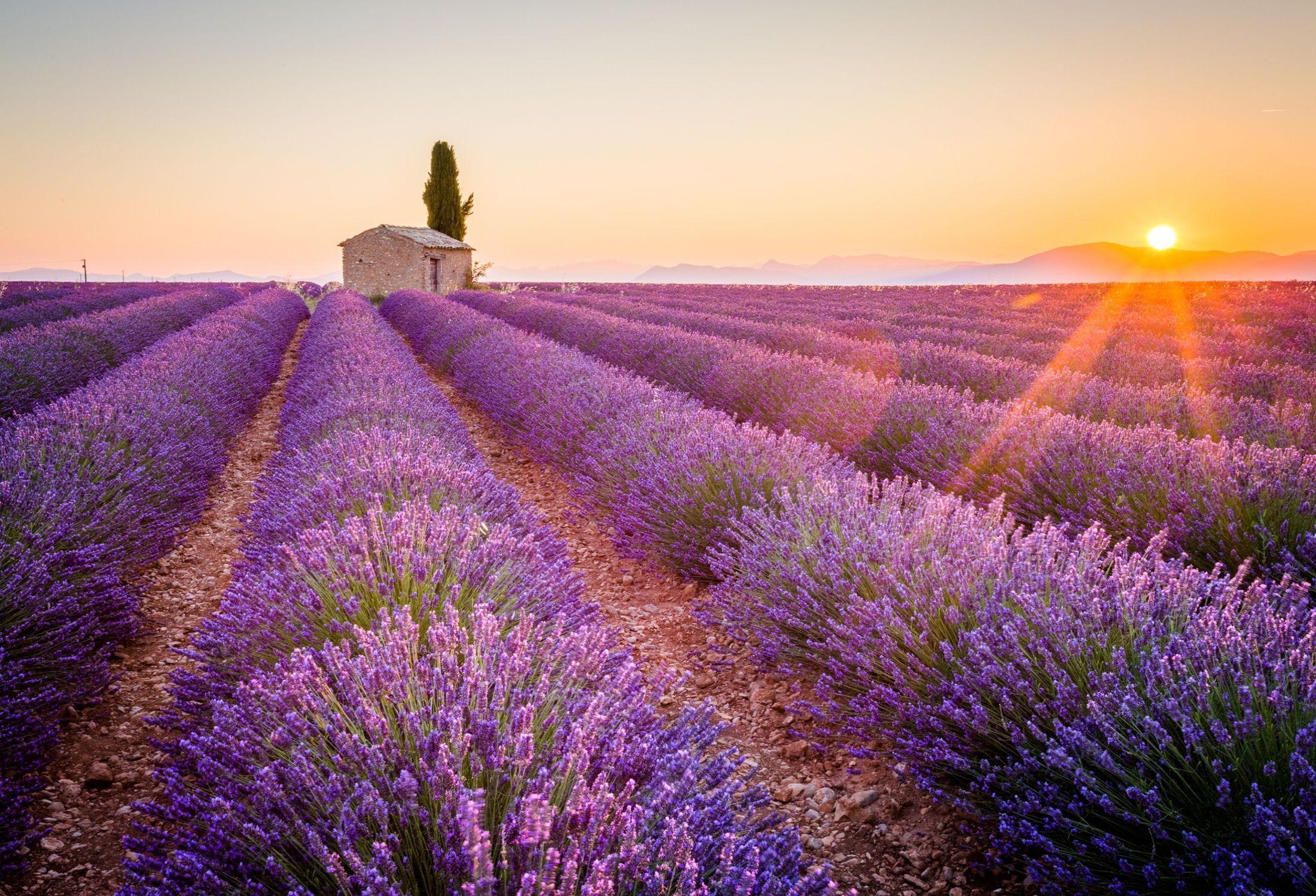 A história por detrás da cor – púrpura